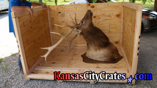 Special wood crate for shipping large wood Elk.